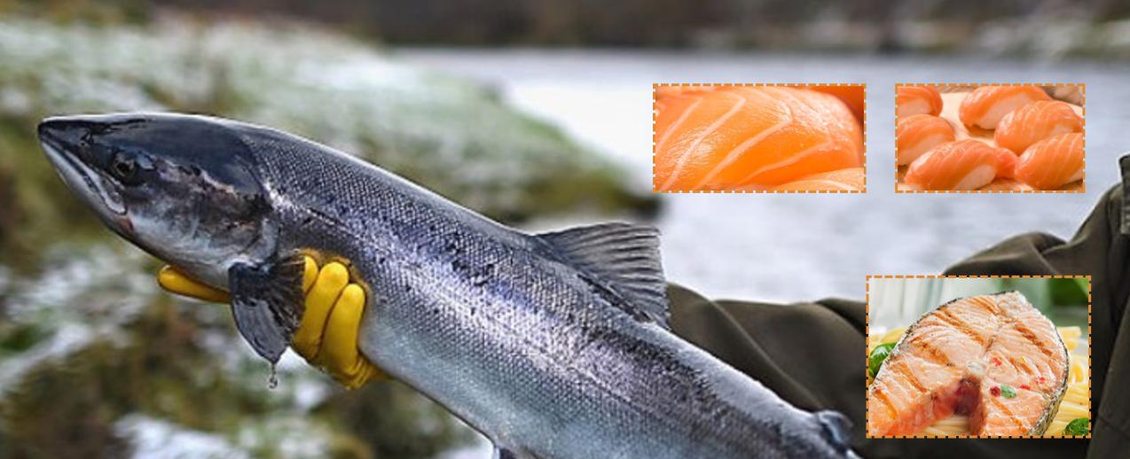 Le saumon en question